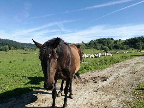 kôň na farme